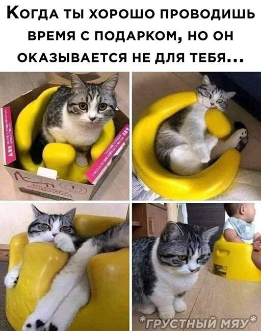 Юморные картинки для настроения:-)
