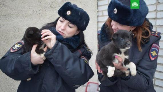 Животные: В Хакасии спасли щенков от мучительной смерти под колесами поезда