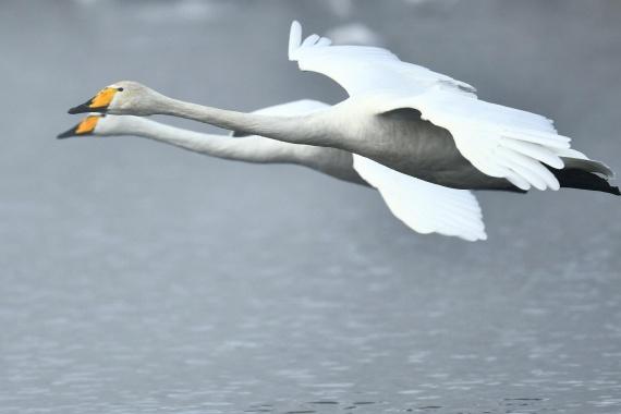Природа: Интересное: Незамерзающее озеро Лебединое