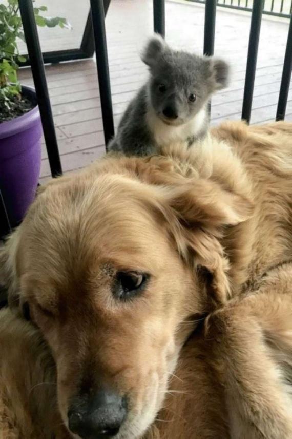 Животные: Пёсик вернулся с прогулки с подарком
