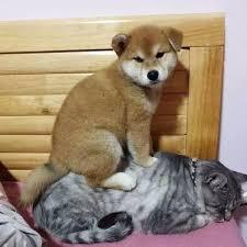 Животные: Мазай и Герасим