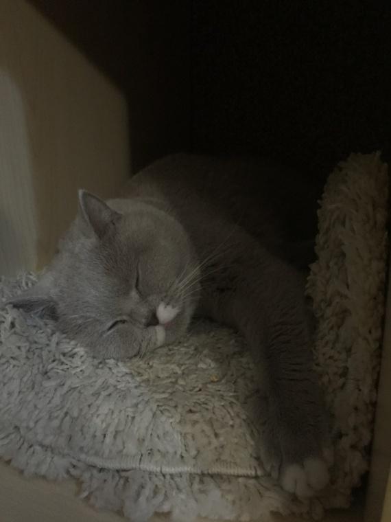 Интересное: Фитнесс-браслет и кот. Как узнать сколько же спит эта пушистая сволочь?
