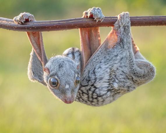Животные: Детеныши редких животных