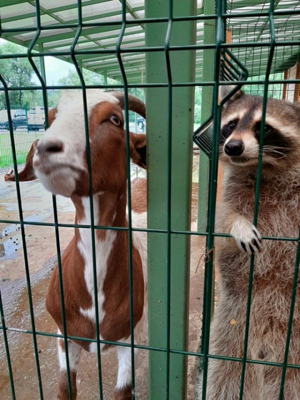 Животные: Звериная мафия