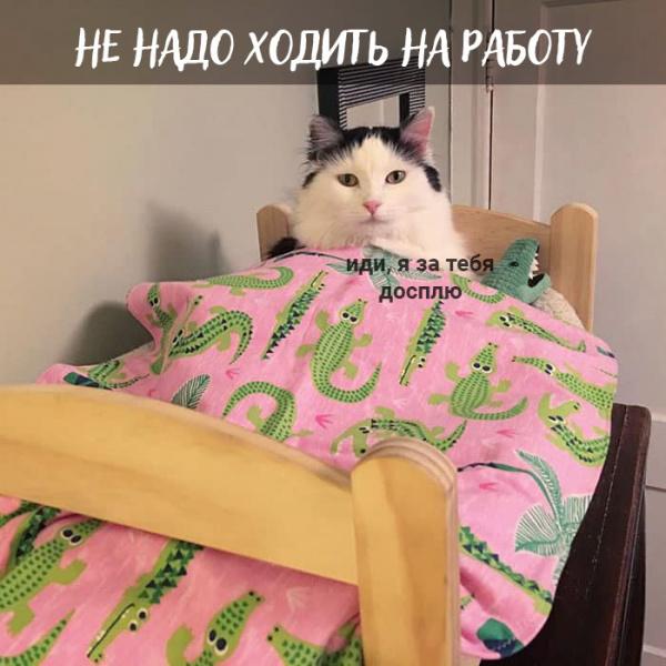 Юмор: Плюсы быть котом: