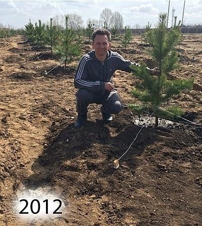 Жизнь: Житель Саратова Михаил Волков вырастил сосновый лес на месте свалки. Там уже живут зайцы и фазаны!