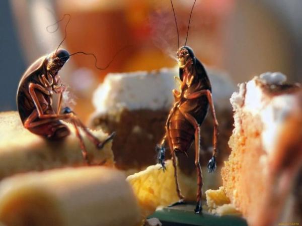 Блог Cfybnfh_ktcf1: Тараканы