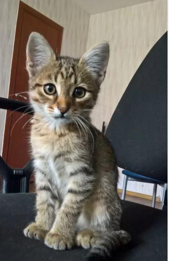 Блог Cfybnfh_ktcf1: Кот который выбрал меня сам