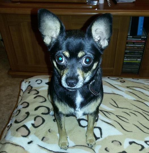 Блог mazdavod: Про собак... И нет больше слов...